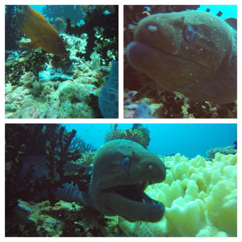 Shamar Divers Maamigili, Malediven