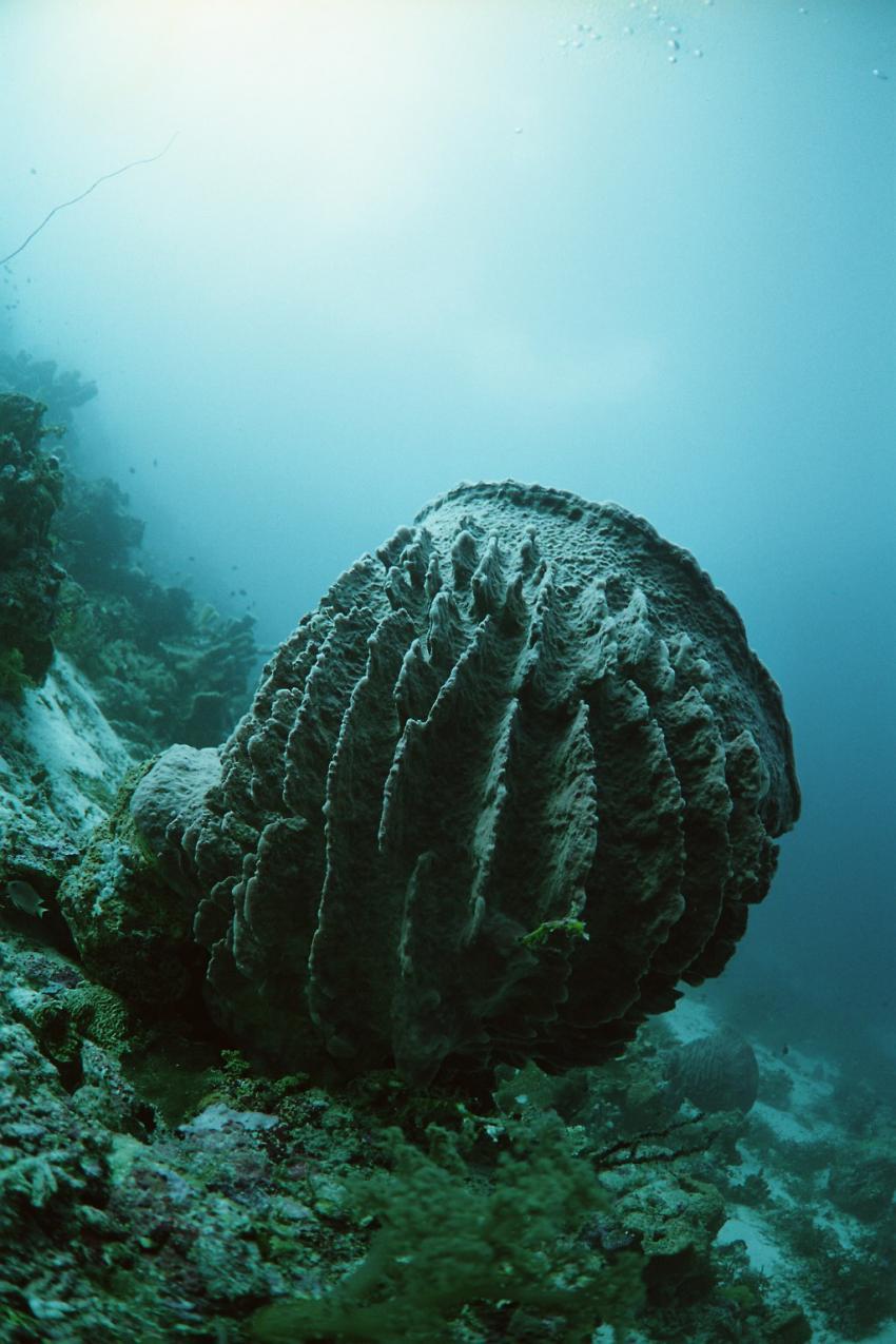 Fotoausstellung Grandeblu Indonesien, Indonesien allgemein,Indonesien,koralle,muschel
