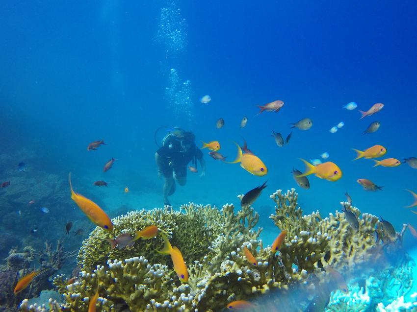 Dive Trek, El Gouna, Ägypten, Hurghada