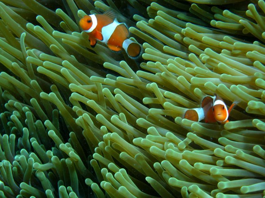 Reefseekers, Labuan Bajo