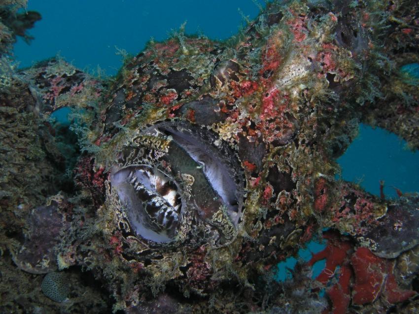 Pier Bullata, Pier Bullata,Philippinen