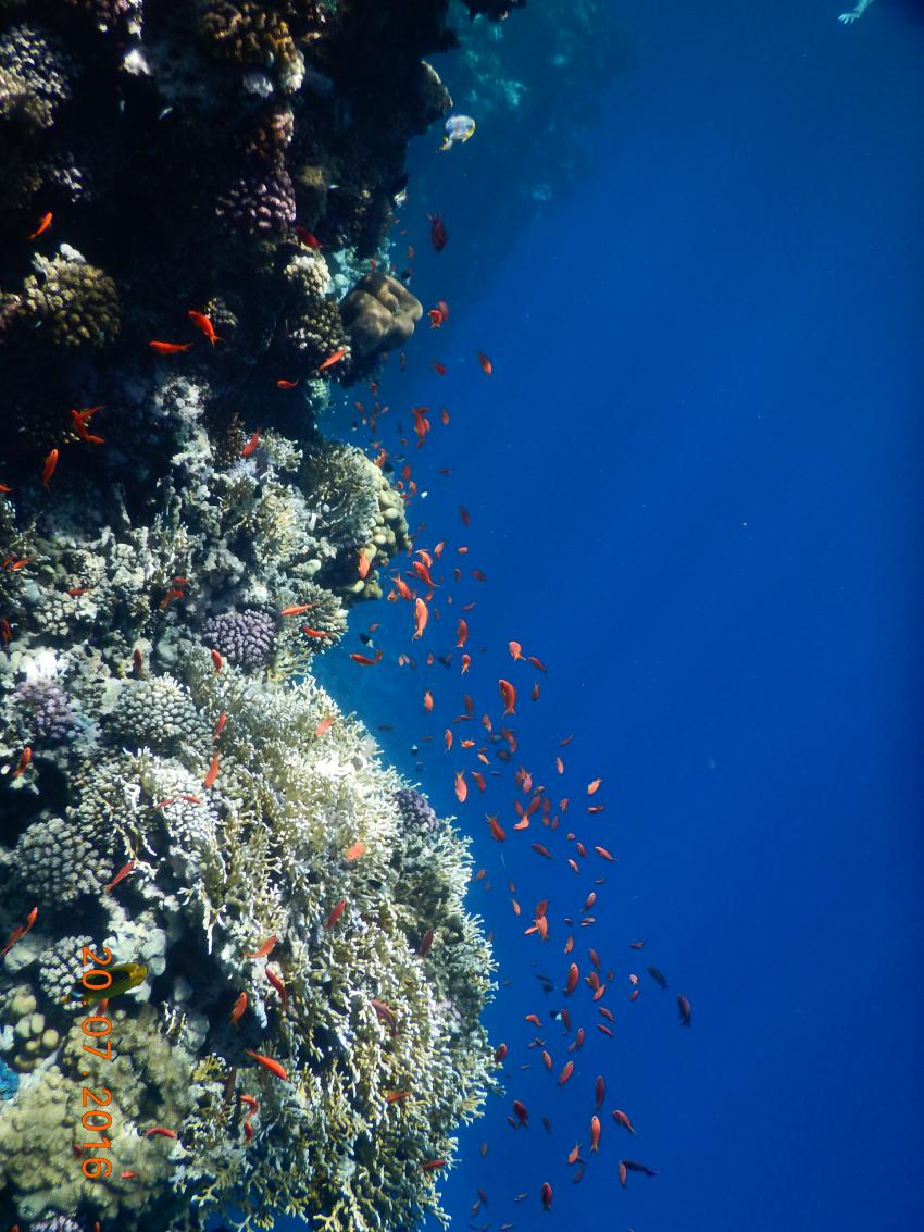 Hausriff, Orca Dive Club Moreen Beach, Ägypten, Marsa Alam und südlich