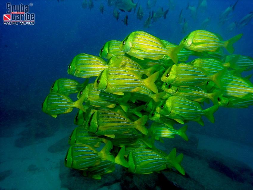 Unterwasser mit ScubaCaribe, ScubaCaribe Cabo San Lucas - RIU Hotels, Mexiko