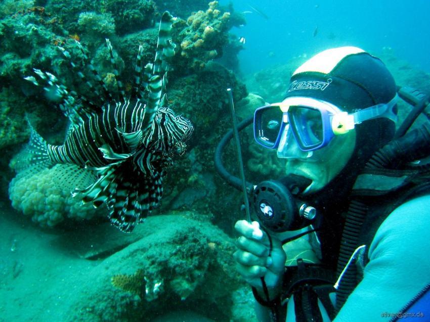 Apo Island, Apo Island,Philippinen,Verboten-Tiere ärgern,Riffhaken,Rotfeuerfisch,Verstoß gegen die Regeln !