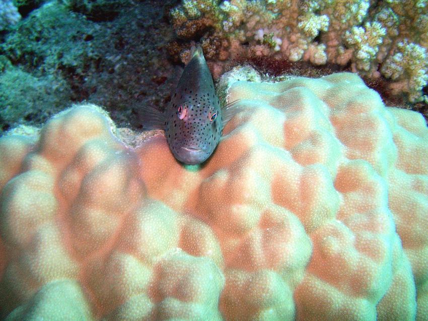 aller Anfang ist schwer, Annette & Robby RedSea-Divers,Hurghada,Ägypten