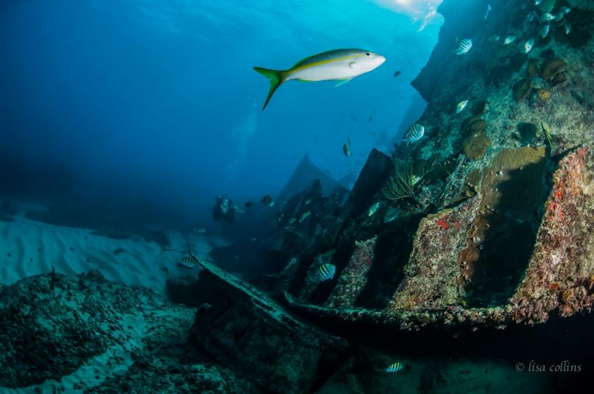 Astron Wreck, Pro Dive International - Occidental Grand Punta Cana, Dominikanische Republik