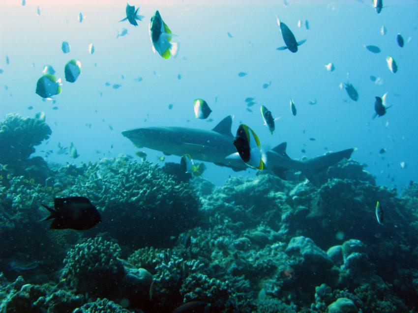 Pandan / Apo Reef, Apo Reef / Pandan Island / Sablayan / Philippinen,Philippinen