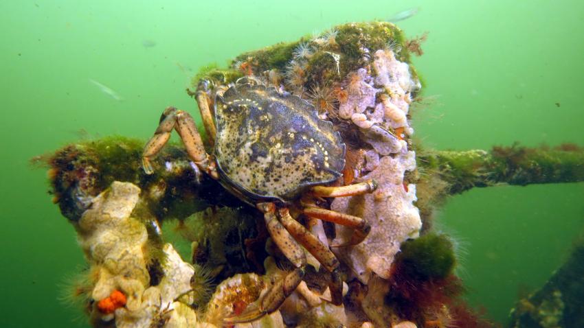 Tauchen im Grevelinger Meer - Dreischor, Den Osse, Scharendijke