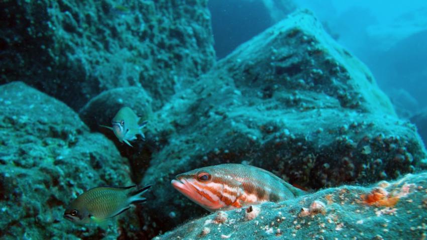 Schlecht gelaunt?, Daivoon Dive Center, Lanzarote, Costa Teguise, Spanien, Kanarische Inseln