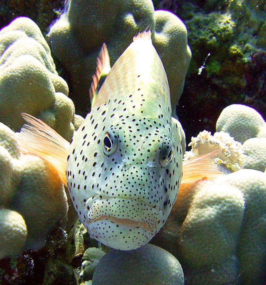 Hausriff Sharm El Arab - Makadi Bay - Extra Diver