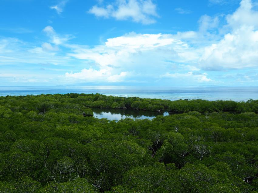 Apo Reef, Apo Reef, Pandan Island, Sablayan, Philippinen