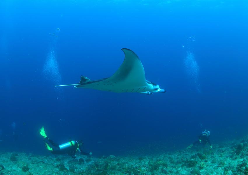 Huruehli Kandu, Manta, Eagle Ray, Taucher, Ari Atoll - Huruehli Kandu, Malediven