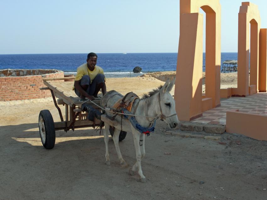 Zabargad Hausriff, Zarbagad,Ägypten