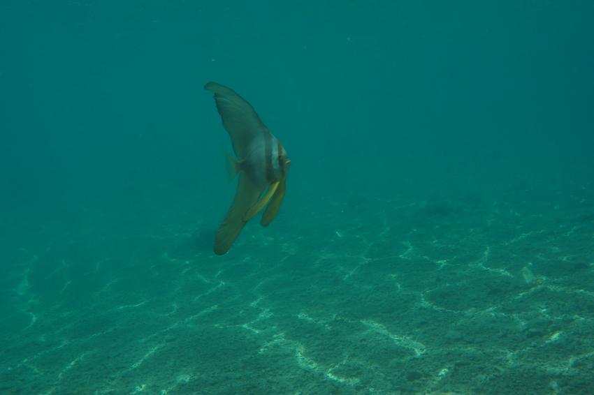 Euro-Divers-Utopia, Euro-Divers, Utopia Beach, Ägypten, El Quseir bis Port Ghalib