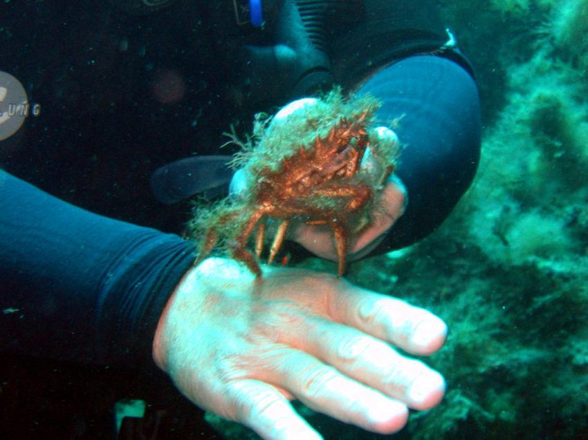 Lantern Point und Umgebung (Cirkewwa), Lantern Point,Malta,gegen Grundsätze verstoßen-nichts berühren,anfassen,Krabbe