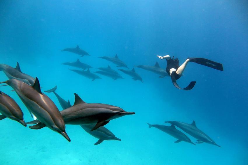 Undersea Adventures, Ägypten, Hurghada