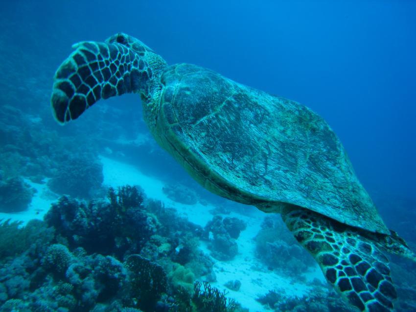 panorama reef, Panorama Reef (Safaga),Ägypten