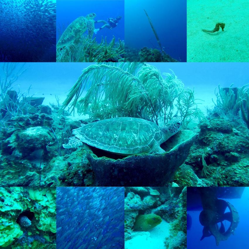 Curaca Impressions, Divecenter Pietermaai, Scuba Lodge and Suites, Willemstad, Niederländische Antillen, Curaçao