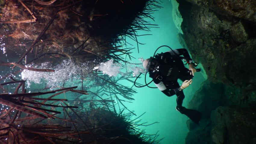 Casa Cenote, Cenote Adventures, Playa del Carmen, Mexiko