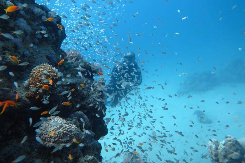 SWD3, Scuba World Divers Makadi Bay, Ägypten, Hurghada