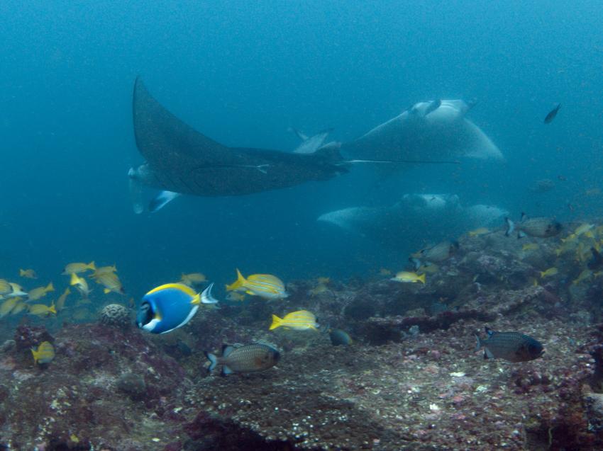 Joy Dive Maldives  -  Safari Island, Malediven