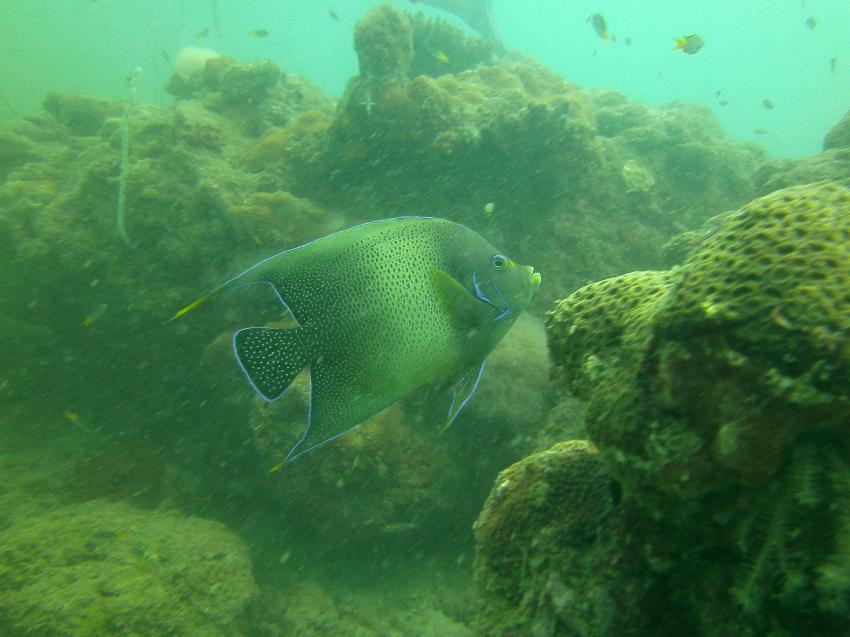 mal etwas größer , LSR Diving Passikuda, Sri Lanka