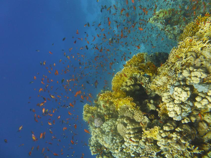 Ras um Sid1, Circle Divers, Badawia Hotel, Ras Um Sid, Sharm El Sheikh, Ägypten, Sinai-Süd bis Nabq