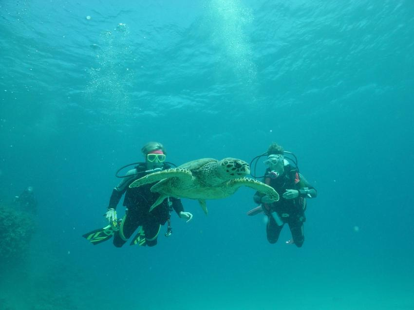 Marsa Alam -Hausriff Equinox, Hausriff Equinox (Marsa Alam),Ägypten,Meeresschildkröte,berühren
