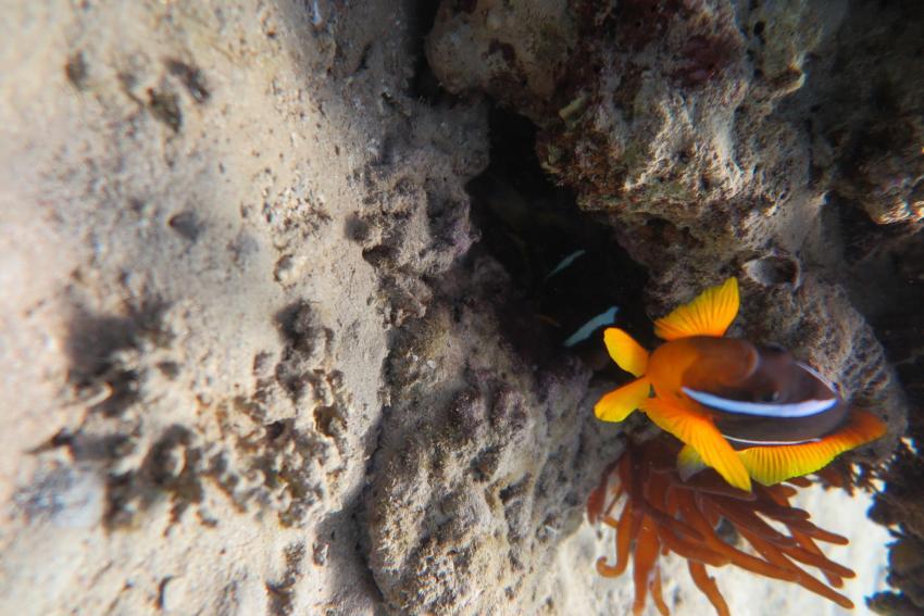 Scuba World Divers_Makadi Bay_Hausriff_4, Tauchen in der Makadi Bay, Scuba World Divers Makadi Bay, Ägypten, Hurghada