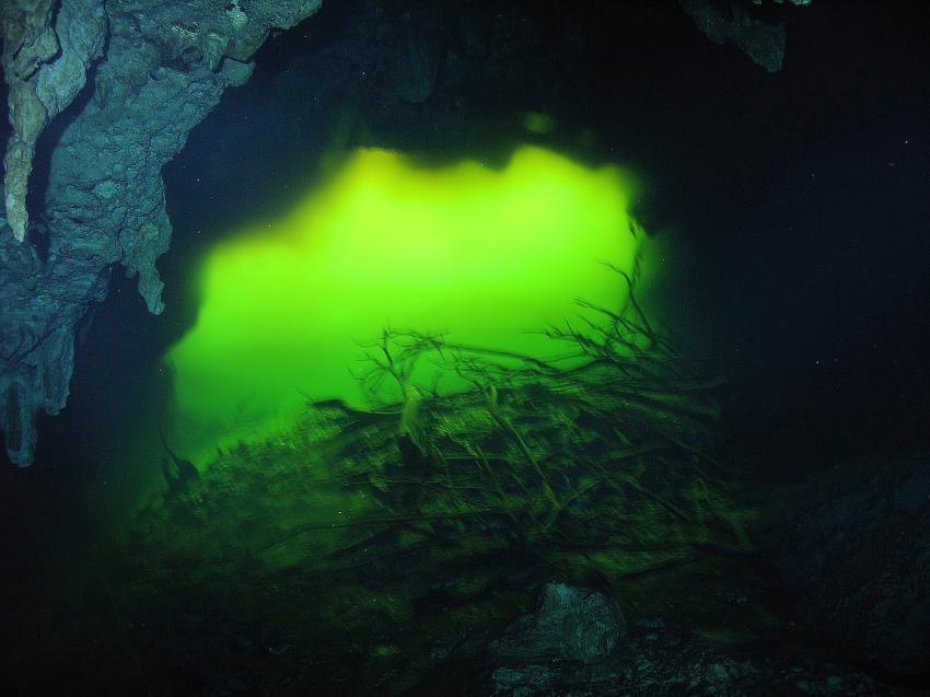 Cenote Aktun-Ha (CarWash), Cenote Aktun-Ha (CarWash),Mexiko,Cenote,Höhle,Ausgang,Licht,grün