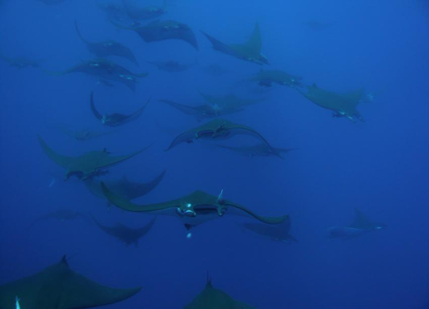 Wahoo-Diving, Santa Maria, Azoren