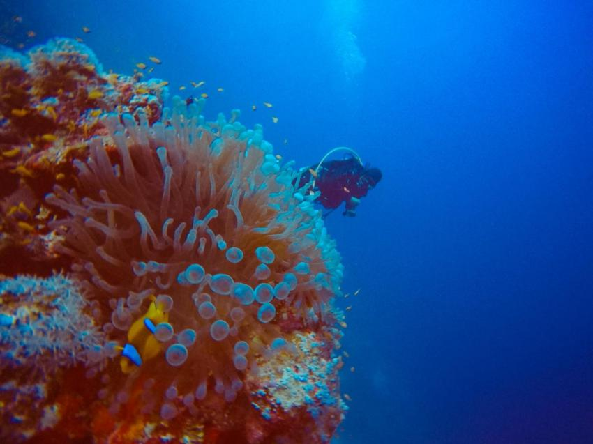 Scuba World Divers SuneoClub Reef Marsa?Hausriff_5, Tauchen Ägypten Marsa Alam Port Ghalib, Scuba World Divers, SuneoClub Reef Marsa, Port Ghalib, Ägypten, El Quseir bis Port Ghalib