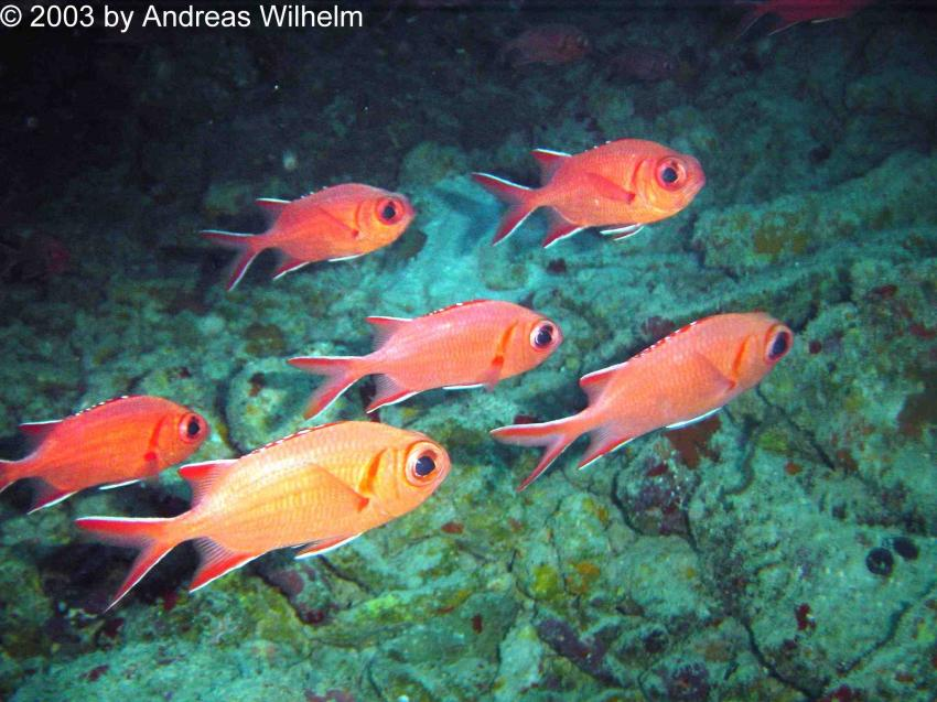 Barrakuda Giri (Nord Male Atoll), Barrakuda Giri,Nord Male Atoll,Malediven