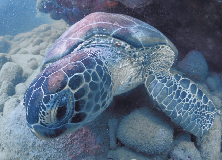 Sea Saba Dive Center, Niederländische Antillen, Saba
