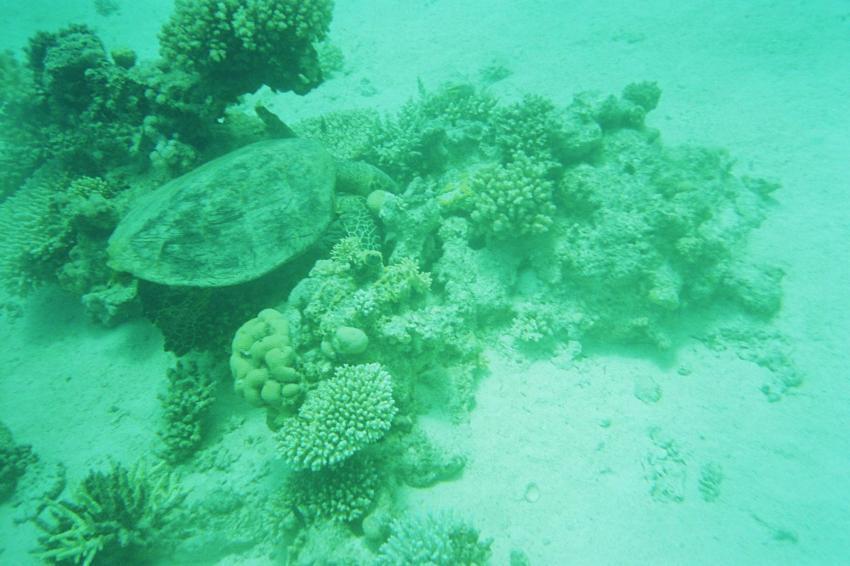 Hurghada - Abu Muchadi Süd, Abu Muchadi Süd,Hurghada,Ägypten