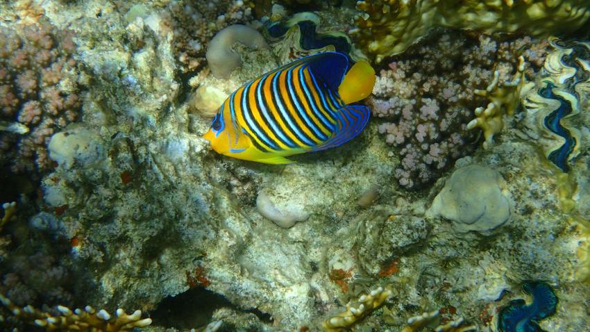 oceanblue,dreams beach,marsa alam, Ägypten, Marsa Alam und südlich