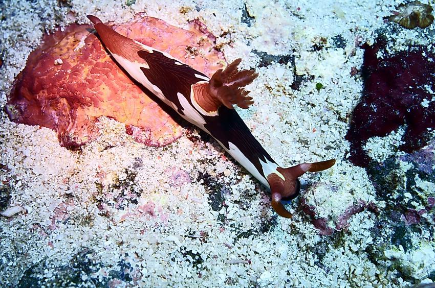 Bilder von Komodo und Rinca, Komodo Nationalpark,Indonesien