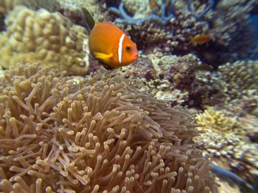 aus dem Süden des Ari Atolls, Süd Ari-Atoll,Malediven