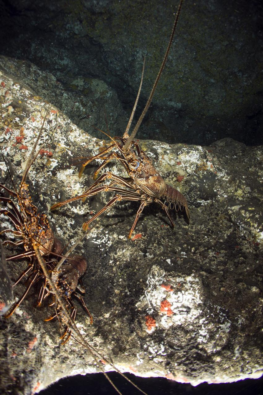 Dive Tribe, Santo Antao, Porto Novo, Kap Verde