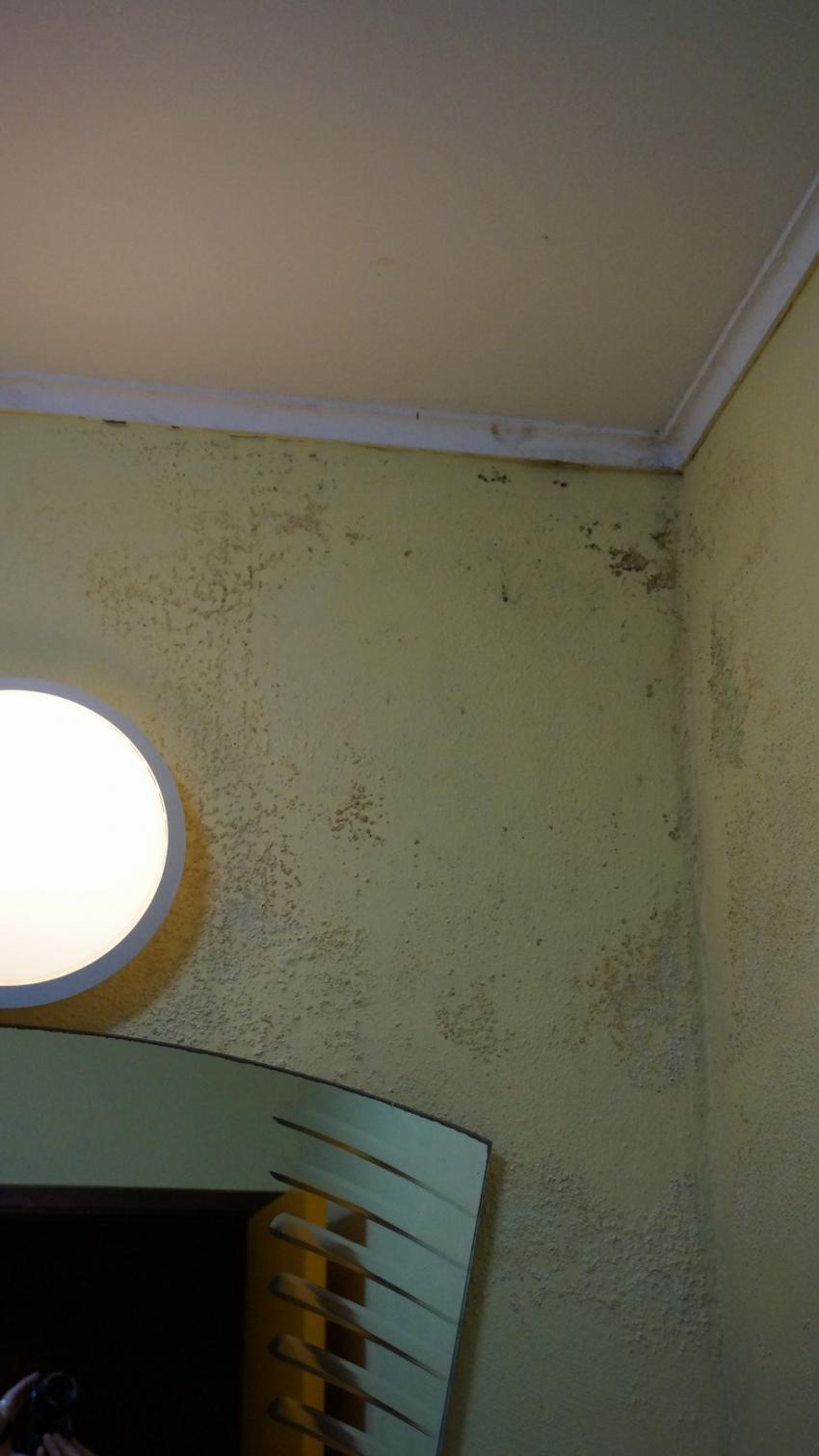 Wand im Bad, Apartments Watapana, Niederländische Antillen, Curaçao