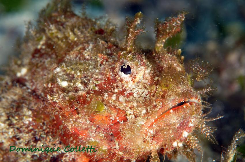 Seaquest Dive Center - Bohol, Philippines, Bohol, Padi, Balicasag, Visayas, Seaquest Dive Center, Moalboal und Bohol, Philippinen