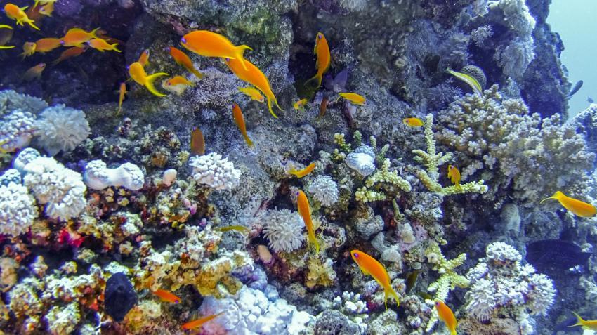 Scuba_World_Divers_Makadi_Bay_2, Tauchen in Makadi Bay, Scuba World Divers Makadi Bay, Ägypten, Hurghada