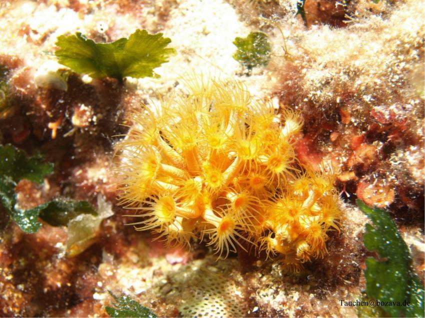 Unterwasser, Bozava,Kroatien