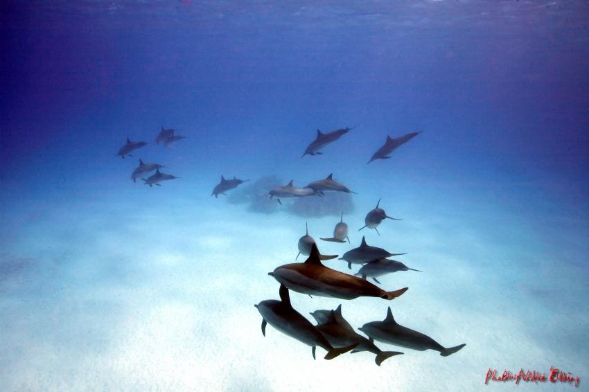 Sataya Reef - Dolphins, Sataya Dolphin Reef,Ägypten
