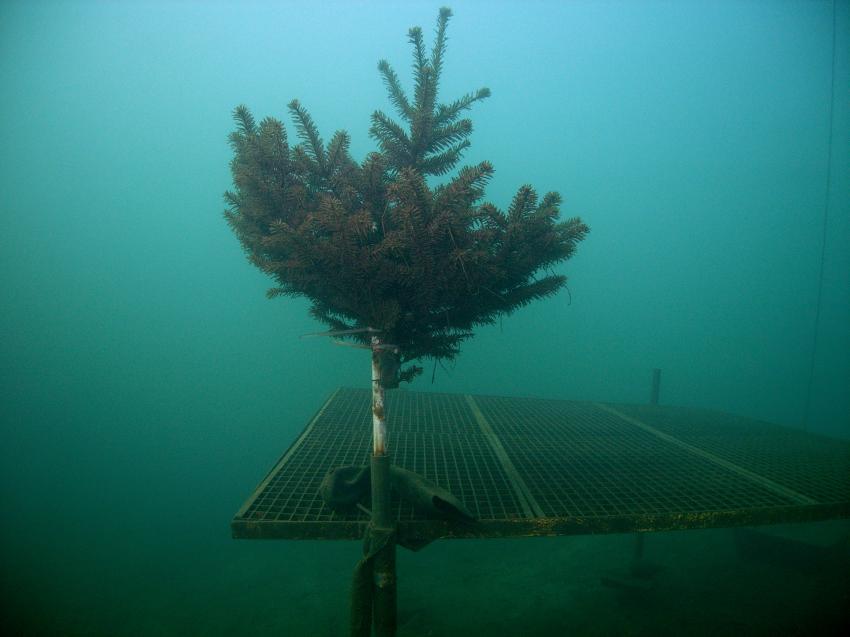 Cospudener See, Cospudener See,Leipzig,Sachsen,Deutschland,Weihnachtsbaum UW