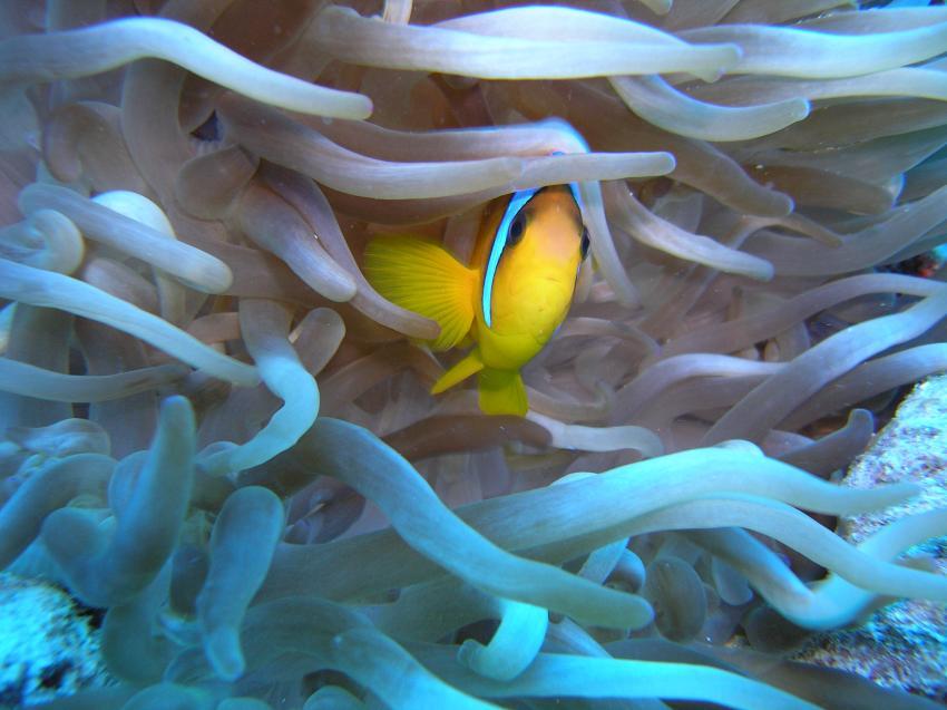 El Fanadir Süd, El Fanadir (Hurghada),Ägypten