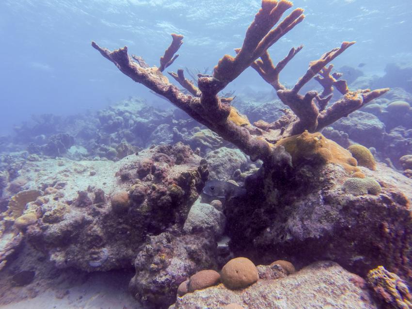 Duikcentrum van de Ven, Livingstone Jan Thiel Resort, Niederländische Antillen, Curaçao