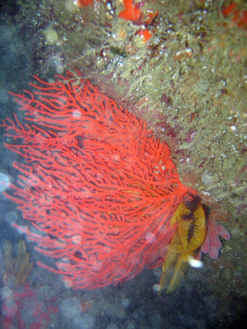 Hermanus, Hermanus,Blowhole,Südafrika