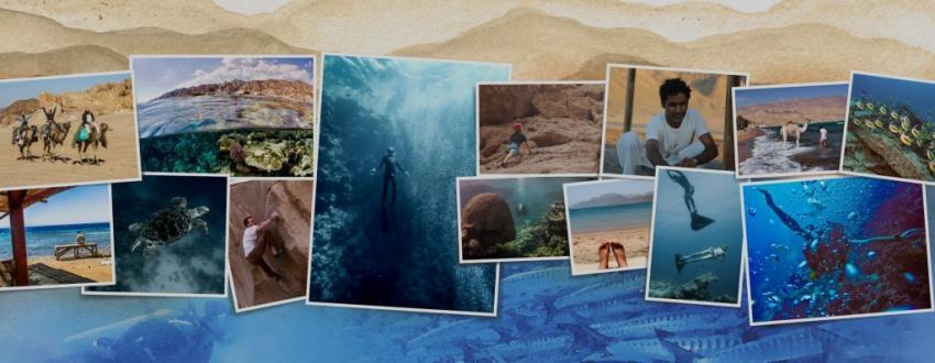 Tauchen, Klettern, dahab, Desert Divers, Dahab, Ägypten, Sinai-Nord ab Dahab