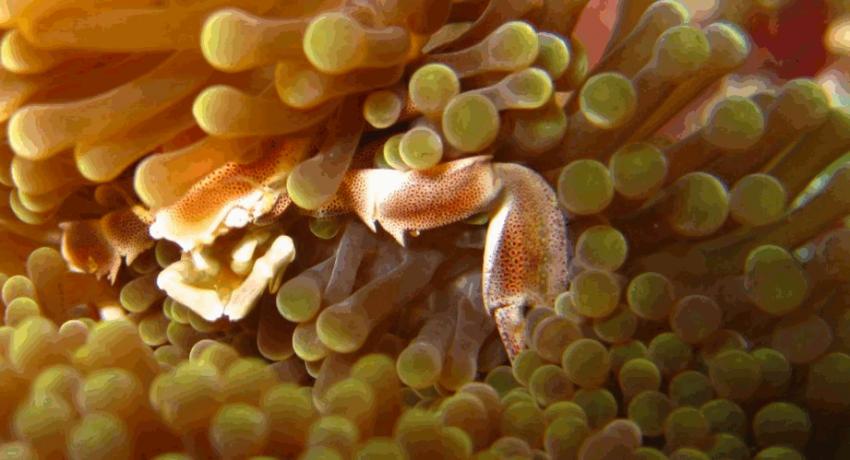 DiveSpirit, Fakarava, Französisch-Polynesien